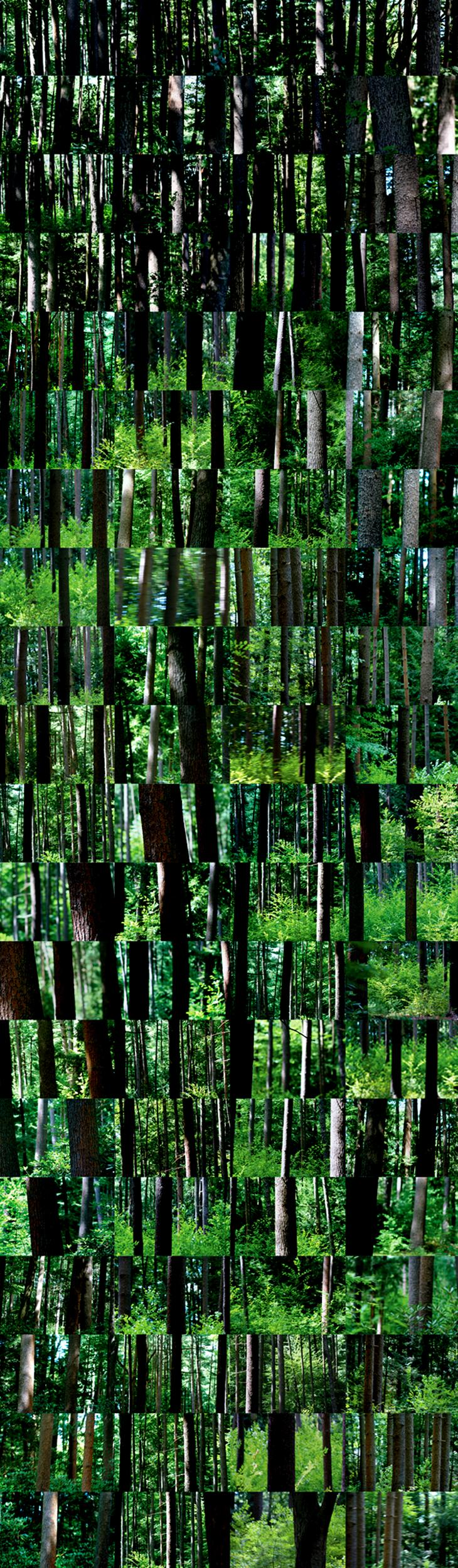 Simo Neri - I Can See the Forest for the Trees - 1