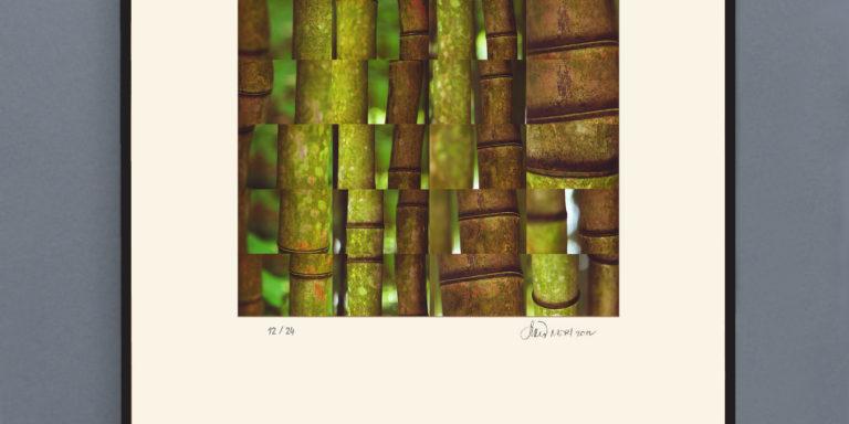 Bamboo_droiteOK