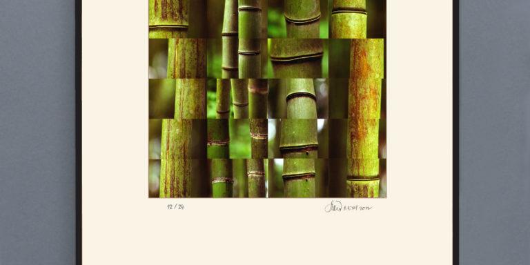 Bamboo_gaucheOK