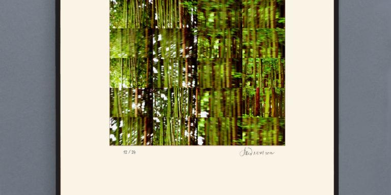 Moving_Bamboo_printOK