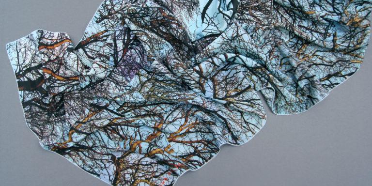 winter_branches_classic