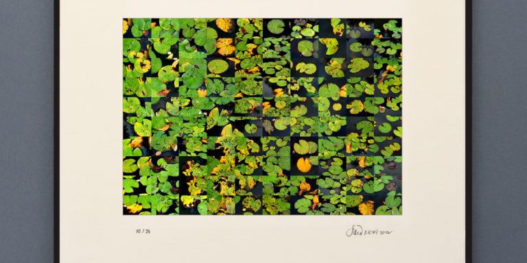 Nenuphar_framed_print
