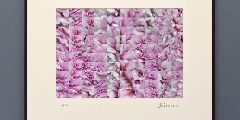 framed_PEONIA
